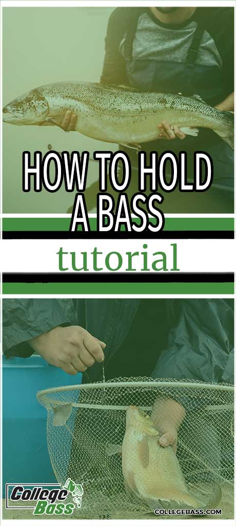 how to hold a bass tutorial
