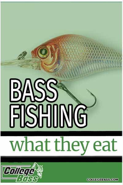 bass fishing what they eat