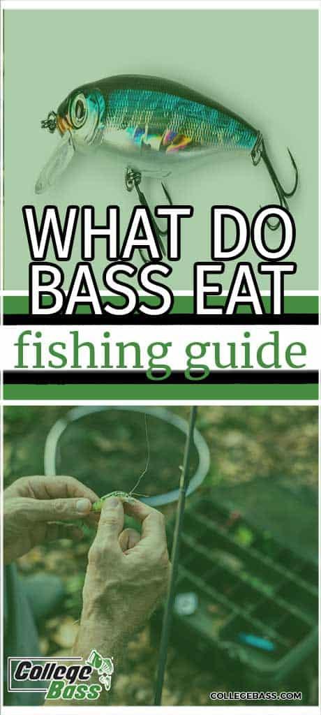 what do bass eat fishing guide