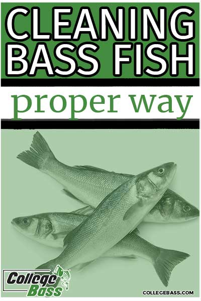 cleaning bass fish proper way