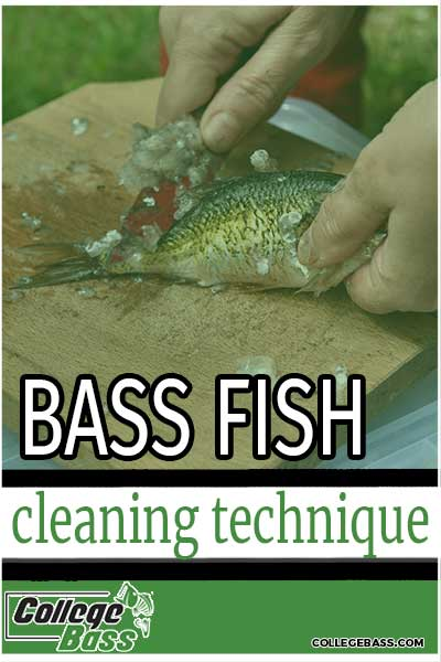 bass fish cleaning technique