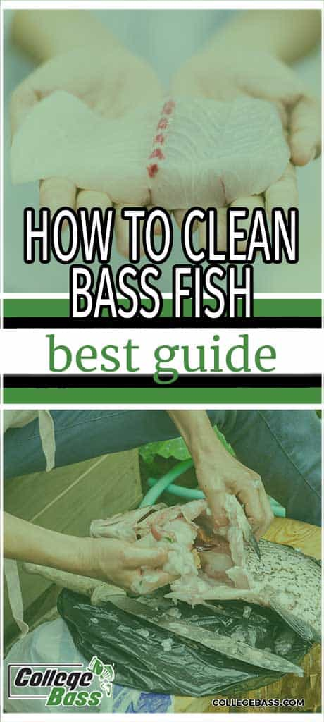 how to clean bass fish best guide
