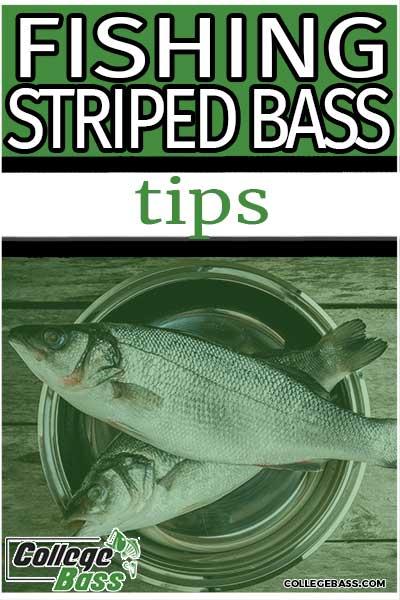 fishing striped bass tips
