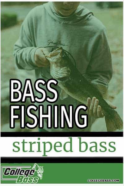 bass fishing striped bass