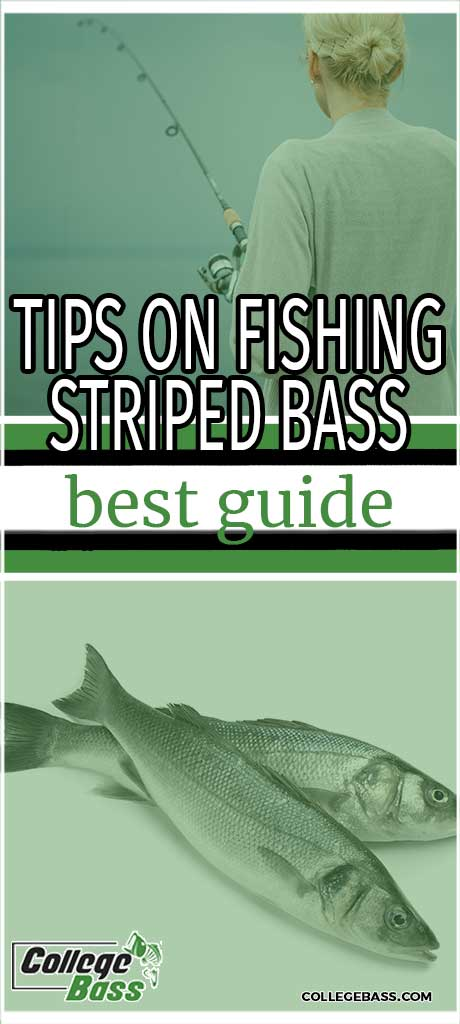 tips on fishing striped bass best guide