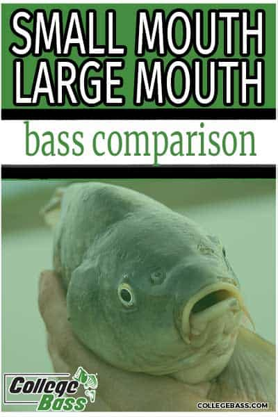small mouth large mouth bass comparison