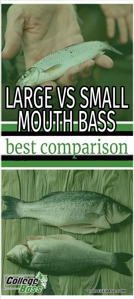 large vs small mouth bass best comparison